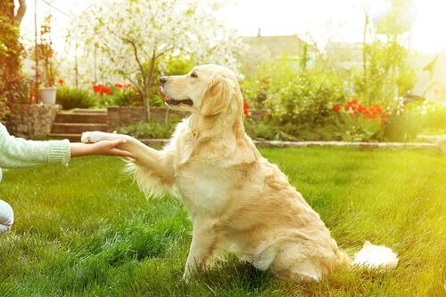 Coach canin – comportementaliste canin